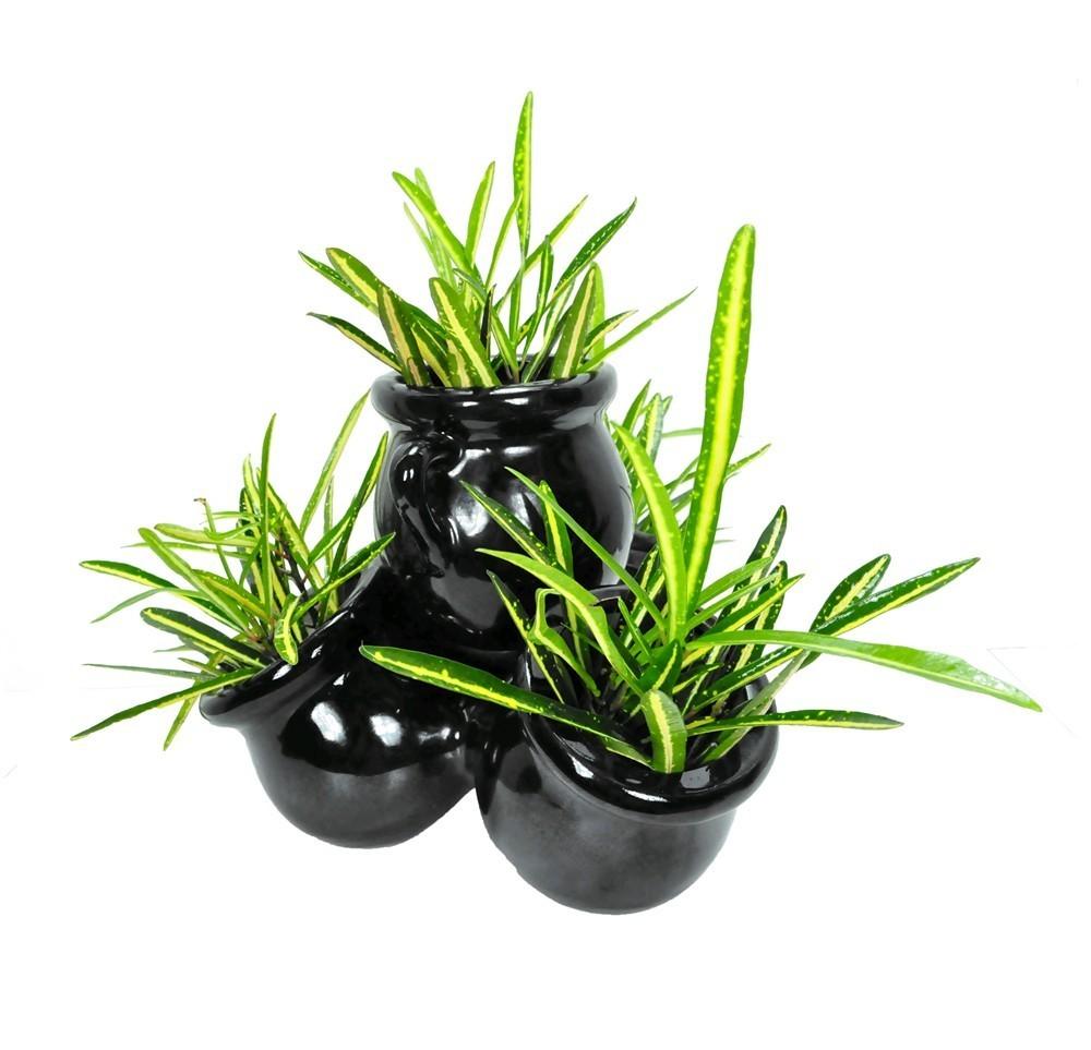 Lule Croton Mix v.10 37595 1