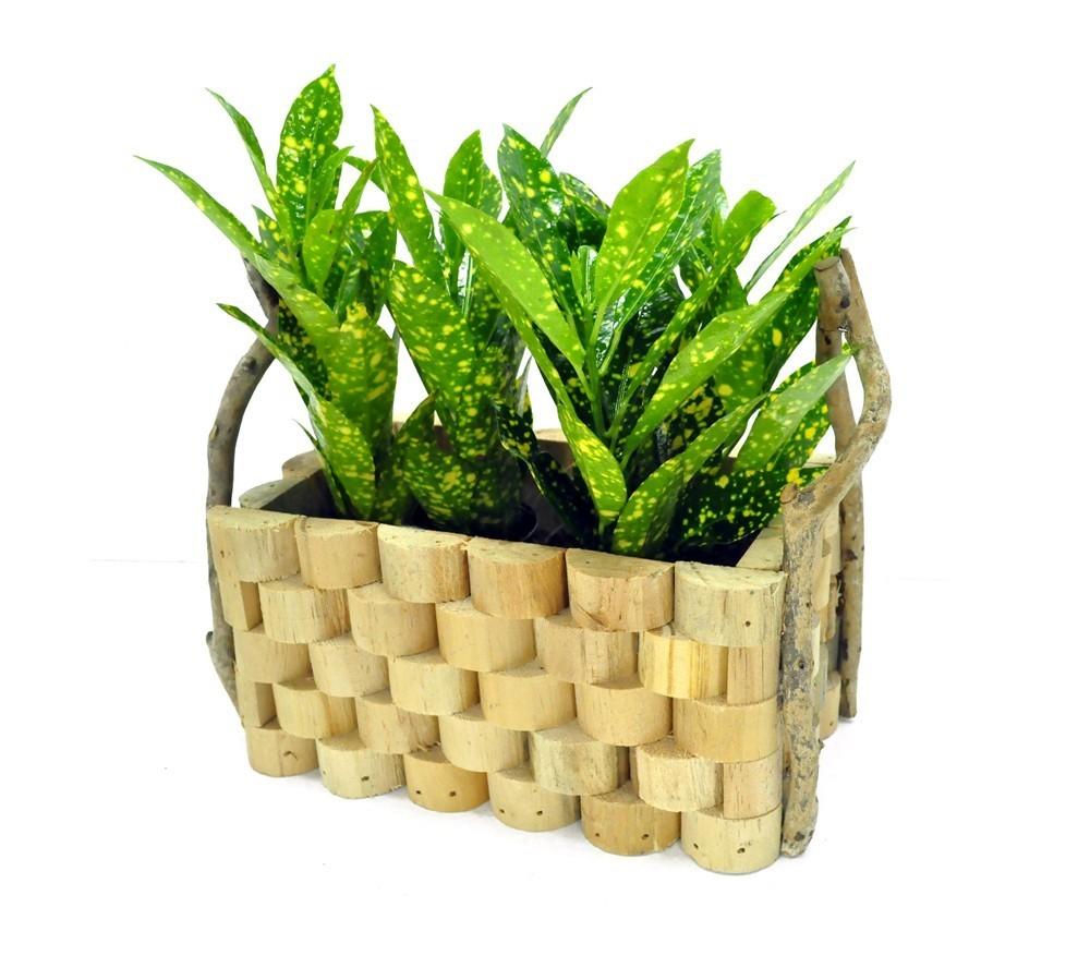 Lule Croton Mix v.10 37595 3